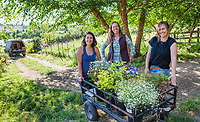 Women farmers with fresh harvested cut flowers in cart by field, No-till flower farming, Singing Frogs Farm; (l-r) Nina Fitch, Elizabeth Kaiser, Katie Brimm