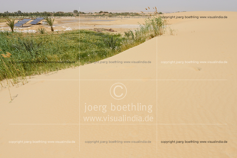 EGYPT, oasis El-Wahat el-Bahariya, desert farming with solar powered pump, wheat field of small scale farmer / AEGYPTEN, Oase Bahariyya, Solar betriebene Pumpe zur Bewaessung eines Weizen Feldes eines Kleinbauern