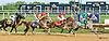DC Willeys Song winning The Buzz Brauninger Arabian Distaff Handicap (grade 1) at Delaware Park on 9/5/15