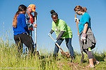 EAMD - 2015 Greens Bayou Tree Planting