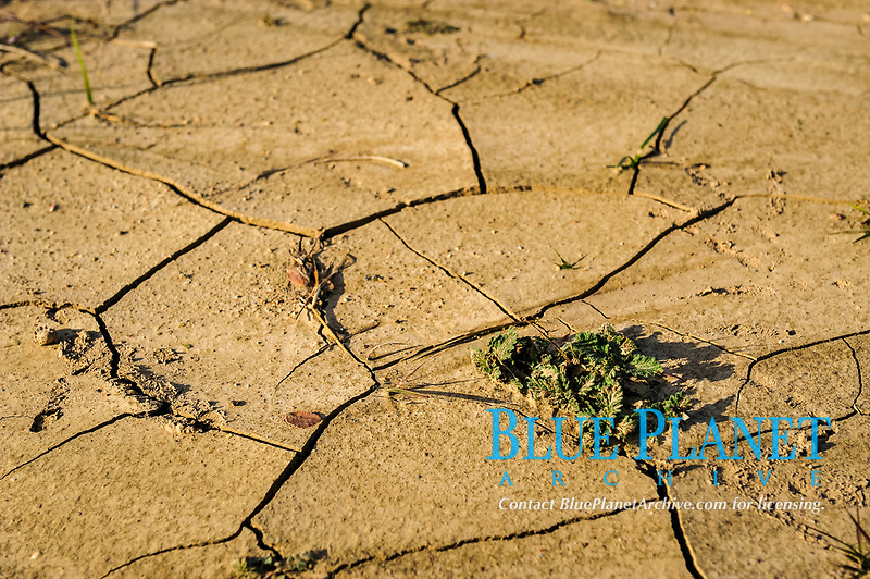 cracked soil on the shore of Lake Brownwood during fall season, a 7,300 surface-acre reservoir created by damming Pecan Bayou, which was a tributary of the Colorado River, Brownwood, Texas, USA