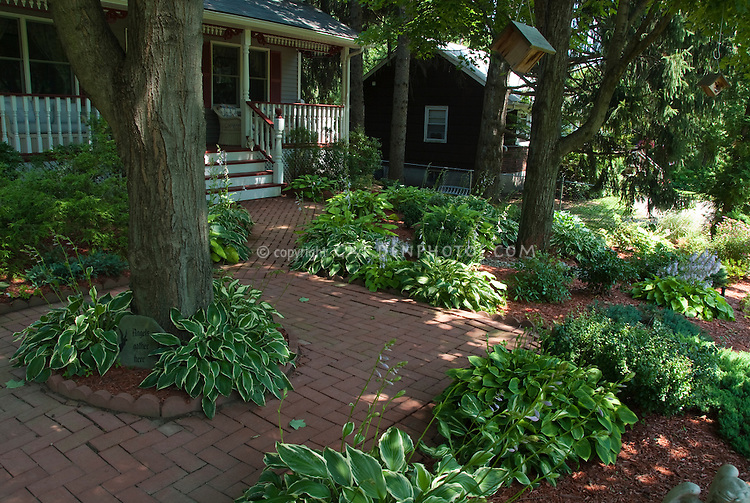 Hostas and plantings under trees in front yard plant for Garden trees for shade