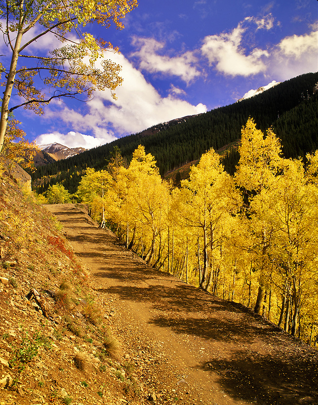 Dirt road with fall colored aspens. Uncompahgre National Forest, Colorado