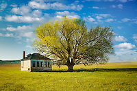 Pioneer Schoolhouse and lone tree in pasture. Near Jordan Valley. Eastern Oregon