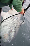 Sean Van Sommeran With Sunfish (Mola Mola)