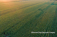 63801-10606 Corn field at sunset-aerial Marion Co. IL