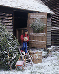 A snowy scene showing a child walking down steps from a wooden building with a discarded Christmas tree by the door also a sledge and basket of logs on the ground nearby. M.R.