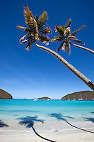 Maho Bay Beach<br /> with palms <br /> Virgin Islands National Park<br /> St. John, U.S. Virgin Islands