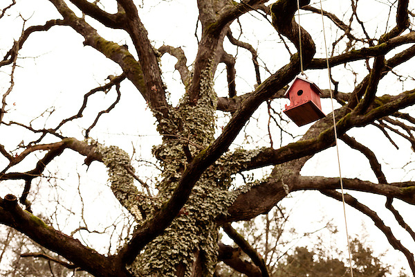 January 2, 2013. Pittsboro, North Carolina.. Many bird houses dot the trees and are on pulleys to allow them to be kept  high to keep the birds safe from the roaming cats.. Siglinda Scarpa, originally from northern Italy, runs the Goathouse Refuge, a no kill shelter for cats. Scarpa, who is also a ceramic artist, runs the shelter with 5 full time employees and currently has over 260 cats in the refuge..