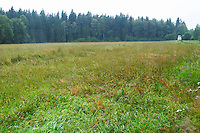 A meadow along a forest edge. A watch tower for hunting elk moose. Smaland region. Sweden, Europe.