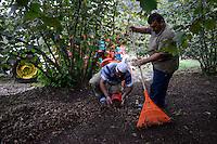 TURKEY, Cumayeri near Duzce, village Uvezbeli, hazelnut processing after harvest at farm, a machine seperate nuts and leaves / TUERKEI, Cumayeri, Bauern bei Haselnussreinigung und Sortierung nach der Ernte, mit einer Maschine werden Blaetter Stiele und Haselnuss getrennt, bevor sie an Haendler verkauft werden, Haselnuesse sind ein wichtiger Rohstoff fuer Schokocreme wie Nutella oder die Schokoladenindustrie