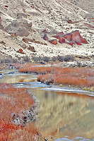 Red Willow in winter on Owyhee River. Oregon