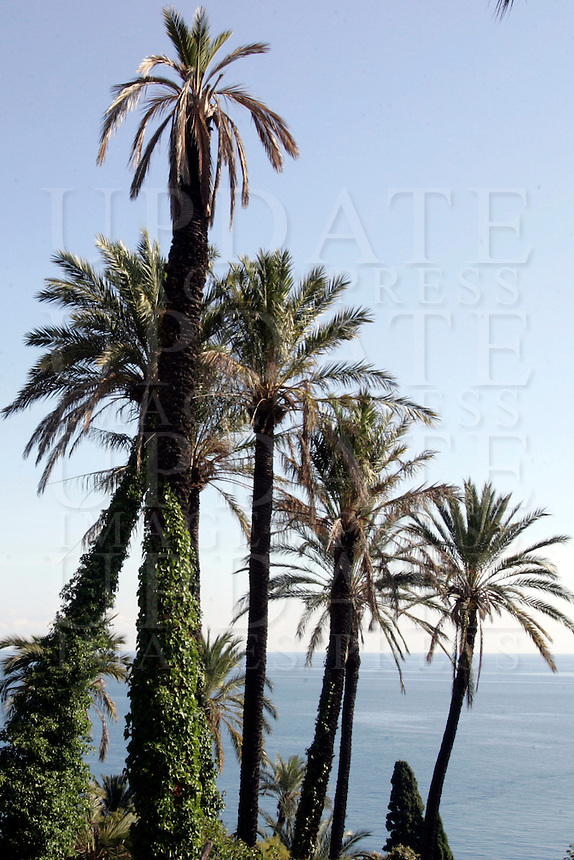 Palme nei pressi di Bordighera.<br /> Palm trees near Bordighera.<br /> UPDATE IMAGES PRESS/Riccardo De Luca