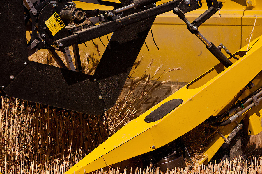 Detail view of a Case 8120 combine reel in operation harvesting wheat in the Palouse of Eastern Washington State.