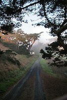 Images of the Pt Reyes National Seashore, Calif