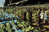 Somalifruits banana Planc.