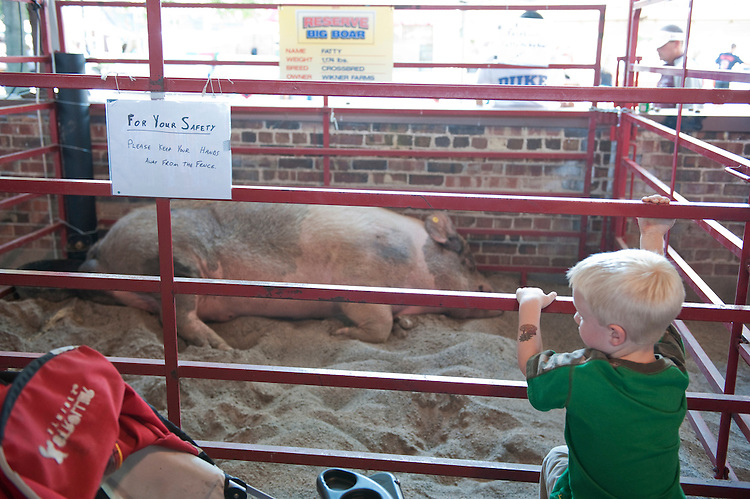 UNITED STATES - AUGUST 12:  A bot checks out Fatty, an 1,174 pound pig, at the Iowa State Fair in Des Moines, Iowa.  (Photo By Tom Williams/Roll Call)