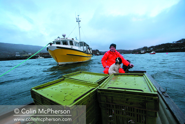 Fisherman John Macgregor transfers his catch to a landing jetty from the My Amber, after a day's fishing for prawns off Scotland's west coast in a marine 'box' in the inner sound of Rona which restricts entry to large trawlers looking for white fish and allows around 16 creelers unrestricted fishing..