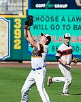 HARTFORD, CT-062520JS15—Ken Kerski (16) catches a fly ball as teammate Connor McEvoy (50) backs him up during  their Connecticut Twilight League game against the Great Falls Gators Thursday at Dunkin Donuts Park in Hartford. <br /> Jim Shannon Republican-American