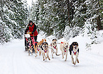 This Iditarod musher and his dogs run thousands of miles a year, but all the work only makes them stronger and more excited to run! I got three chances and about thirty seconds with them before they hurtled out of sight into the forest. The light early winter snowfall on the logging road in the Washington Cascades made it impossible for him to stop and pull his dogs around. Washington State, USA