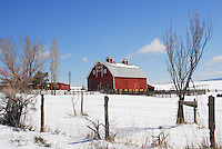 Blue skies cap this lovely old red barn as it stands in a field of snow.