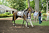 Appealing Cat before The Walking in Da Sun Stakes at Delaware Park on 7/11/12
