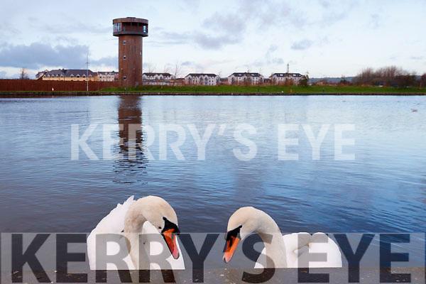 Ballyseedy Wetlands