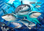 Howard, SELFIES, paintings+++++,GBHR894,#selfies#, EVERYDAY ,maritime,sharks,dolphins ,puzzle,puzzles