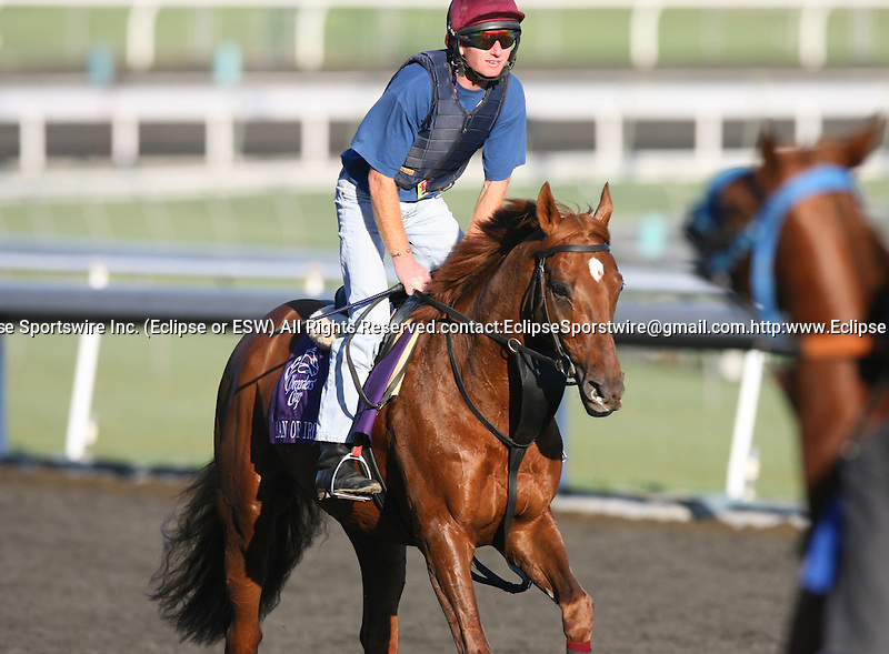 04 November 2009: Man of Iron on track in preparation for the Breeders' Cup at Santa Anita Park