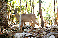 A deer which is native to the area shot at a reserve near Playa del Carmen. Photos for Jasai´s catalogue of the houses of Memo and the surrounding area