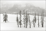 Yellowstone National Park, Wyoming:<br /> Lamar Valley trees in snowstorm