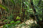 rainforest of Central station along Wanggoolba Creek