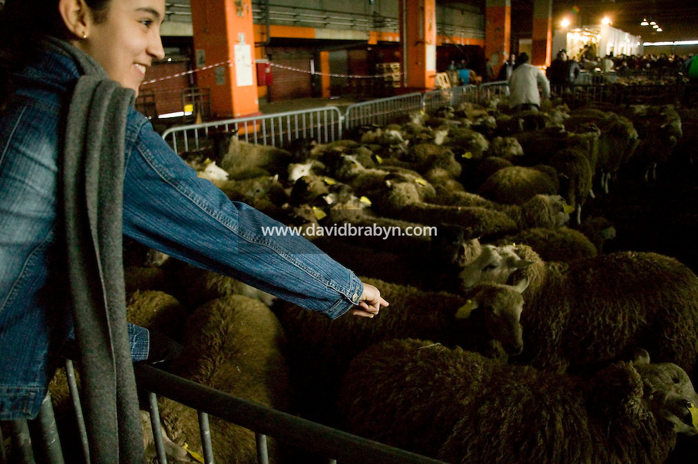 A young woman points to the sheep het family has purchased at a temporary slaughterhouse set up in an hanger in Pantin, outside Paris, France, during the ritual sheep slaughter held for the Muslim celebration of Aid-el-Kebir, 1 February 2004. Photo Credit: David Brabyn.