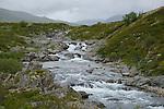 Stream habitat, Dovrefjell National Park, Norway
