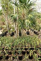 Palm tree seedlings at  Hacienda Tres Rios, an eco-luxury resort on the Riviera Maya, Quintana Roo, Mexico.