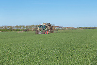 Contractor applying 30 m³ per hectare of anaerobic digestate to winter wheat - Cambridgeshire, April