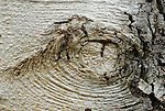 The bark of a tree in a Sedona valley looks like an eye to the beholder.