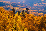 Autumn,Brazos Mountains,New Mexico