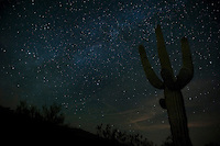 Milky Way over saguaros, Arizona.
