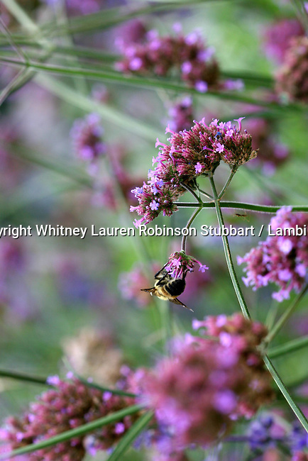 Earthly Companions Insects, butterflies, dragonflies, bees, lady bugs, flowers, flying insects, slugs, nests, etc.