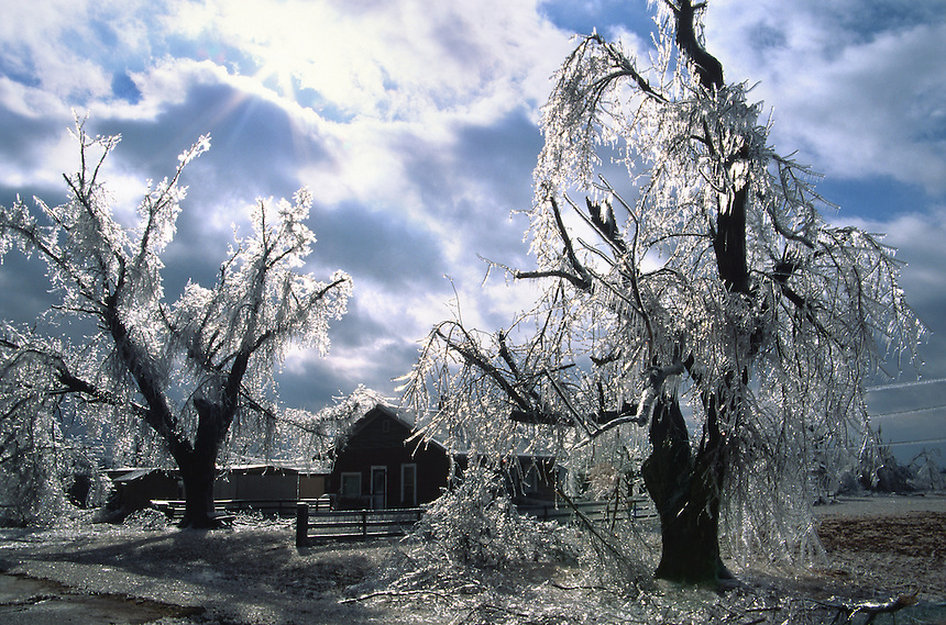 Glistening ice-coated tree branches crash to the ground at a farmstead in Kingfisher Oklahoma after the passage of a devastating ice storm in February.