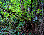 Details and vignettes of the Pacific Northwest rainforest