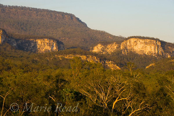 Carnarvon National Park, Carnarvon Gorge entrance at sunrise, Queensland, Australia