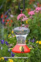 01162-12520 Ruby-throated Hummingbirds (Archilochus colubris) at feeder near flower garden,  Marion Co.  IL
