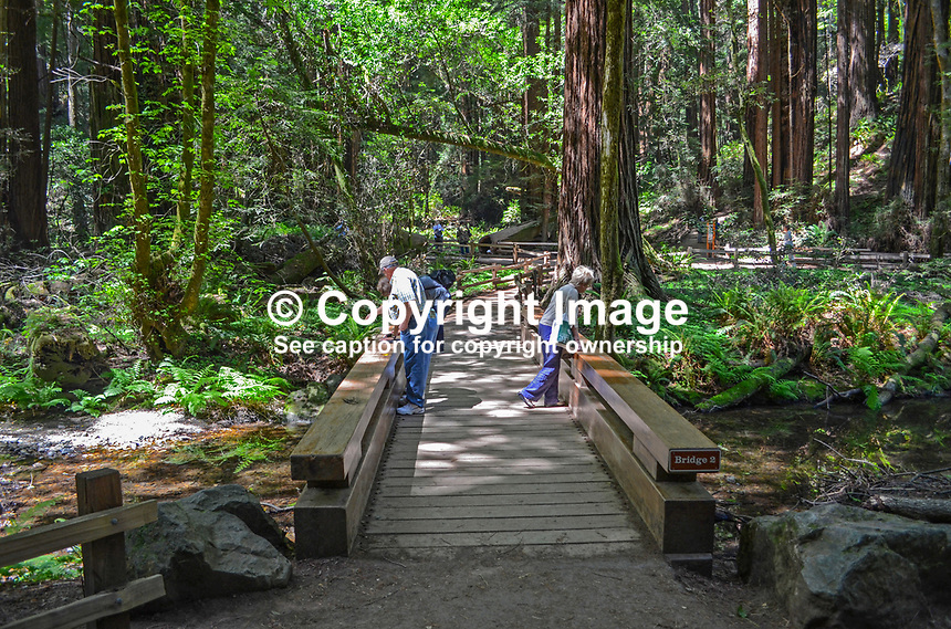 Muir Woods is world famous for its redwoods, Sequoia sempervirens. it is  located in the midst of a metropolitan region just eight miles north of San Francisco. 201304302173<br /> <br /> Copyright Image from Victor Patterson, 54 Dorchester Park, Belfast, UK, BT9 6RJ<br /> <br /> Tel: +44 28 9066 1296<br /> Mob: +44 7802 353836<br /> Voicemail +44 20 8816 7153<br /> Skype: victorpattersonbelfast<br /> Email: victorpatterson@me.com<br /> Email: victorpatterson@ireland.com (back-up)<br /> <br /> IMPORTANT: If you wish to use this image or any other of my images please go to www.victorpatterson.com and click on the Terms &amp; Conditions. Then contact me by email or phone with the reference number(s) of the image(s) concerned.