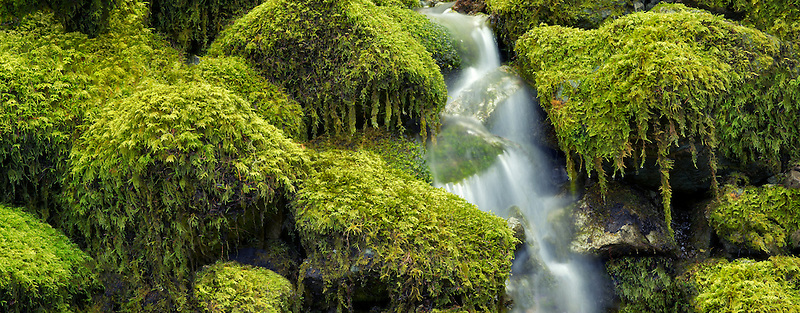 Moss covered rocks and stream. Opal Creek Wilderness, Oregon