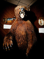 A stuffed bear at the Little Bear Inn restaurant, located just outside Cheyenne, Wyoming, Thursday, June 2, 2011. The restaurant is decorated in a 1960s style with many stuffed animals lining the walls...Photo by Matt Nager