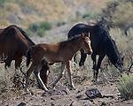 2013  Wild Horses