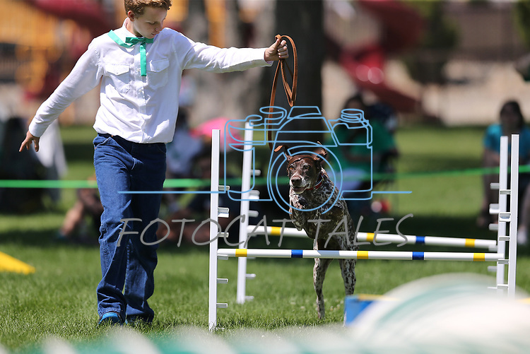 Devvan Merritt and his dog Vanna compete in the dog agility course at the Carson City Fair at Fuji Park on Tuesday, July 25, 2017. <br /> Photo by Cathleen Allison