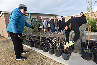 NWA Democrat-Gazette/FLIP PUTTHOFF <br /> TREES FOR THE ASKING<br /> Deb Short (left) and her husband, David Short, get free trees ready for customers Saturday April 14 2018 during the City of Bentonville tree giveaway at the Bentonville Community Center on Southwest I Street. The event distributed 400 trees of several varieties to Bentonville residents, said David Short, with the city tree and landscaping committee. Residents could pre-register to get two free trees and choose the variety they like. Some trees were available on a first-come, first-served basis. The event was the 15th year in a row for the tree giveaway, which is held twice each year.